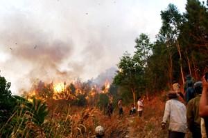 Hậu Giang: Nâng cấp cảnh báo cháy rừng