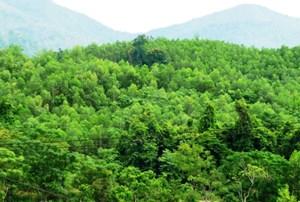 Lâm Đồng: Tiếp tục chương trình Giảm phát thải khí nhà kính thông qua nỗ lực hạn chế mất rừng…