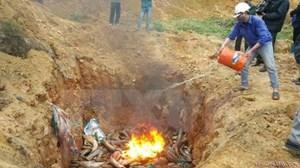 Lào Cai: Bắt giữ và tiêu hủy 640kg cá tầm nhập lậu