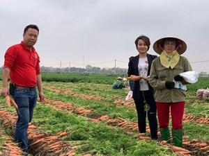 Mở rộng tiêu thụ cà rốt Hải Dương ra toàn quốc