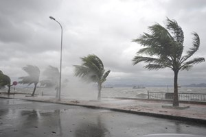 Năm 2019, có khả năng xuất hiện khoảng 10 -12 cơn bão