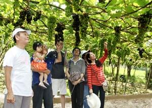 Ninh Thuận: Huy động nguồn lực, cải thiện hạ tầng du lịch