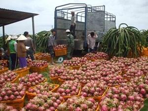 Nông sản vẫn phụ thuộc một thị trường