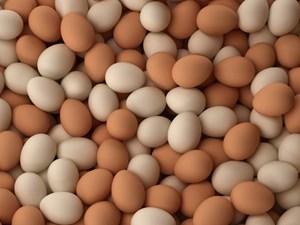 Tiêu hủy gần 5.000 quả trứng gà nhập lậu