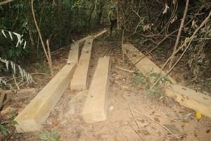 Truy trách nhiệm để xảy ra phá rừng quy mô lớn