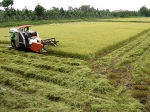 Vốn vay cho nông nghiệp còn thấp