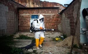 Zika đã lan rộng ra 19/24 quận, huyện của TP HCM
