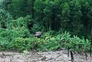 Phát hiện 2 cá thể voi rừng ở Quảng Nam