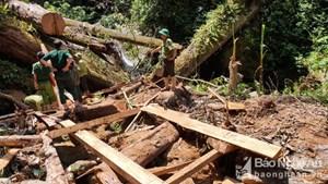 Nghệ An: Khởi tố vụ án khai thác 25 cây Săng vì trái phép