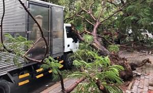 TP HCM: Cây phượng vĩ gần trường đại học bật gốc đổ đè xe tải