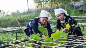 BẢN TIN MẶT TRẬN: Người Tuyên Quang làm nông thôn mới