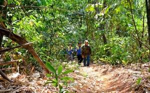 Hiệu quả từ giao khoán, bảo vệ rừng