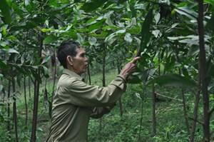 Ông Vinh thương binh trồng rừng