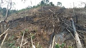 Chặt phá hơn 6ha rừng, 2 đối tượng bị khởi tố