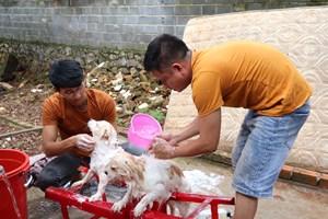 Nhóm bạn trẻ phố núi làm bảo mẫu của hàng trăm chú chó mèo bị bỏ rơi