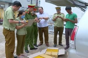 Thanh Hóa: Phát hiện hơn 5.000 lọ thuốc bảo vệ thực vật không rõ nguồn gốc