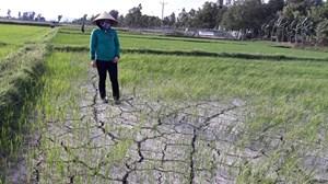 Nghệ An: Trên 11 ngàn ha cây trồng bị hạn