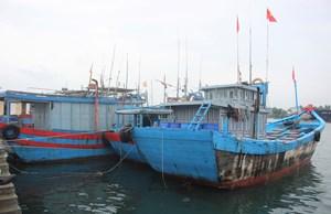 Quảng Nam: 129 tàu cá đang hoạt động trên biển