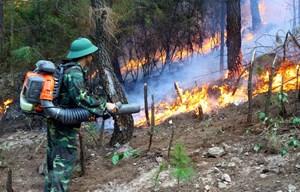 Tăng cường phòng cháy, chữa cháy rừng