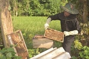 Khá lên từ nuôi ong mật