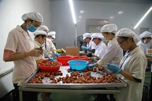 Nông sản Việt vào các thị trường khó tính