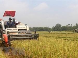 Nafiqad bác bỏ thông tin 90% người dân Việt Nam đang ăn 'gạo bẩn'