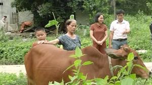 Thái Nguyên: Đẩy mạnh công tác giảm nghèo bền vững