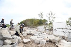 Sai phạm tại dự án tuyến đê biển Tây: Ý kiến của UBND tỉnh Cà Mau