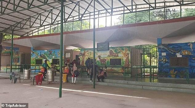Vườn thú Kanpur là nơi đang nuôi dưỡng con khỉ nghiện rượu này.