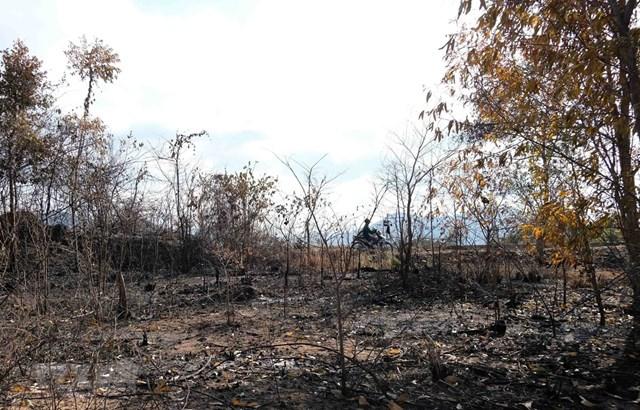 Nguy cơ cháy rừng cao trong thời tiết nắng nóng. (Ảnh: TTXVN).