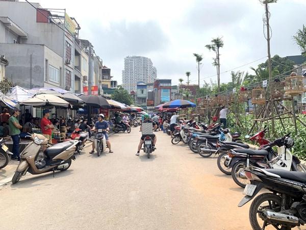 Con đường dưới chân cầu vượtVăn Cao, dốc Tam Đa bỗng dưng trở thành chợ chim một cách tự phát.