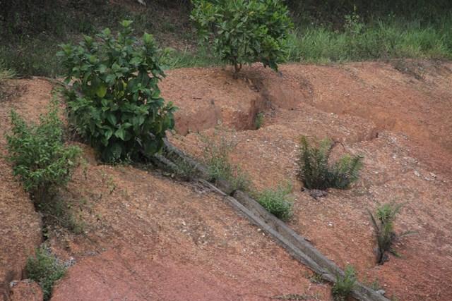 Tình trạng sụt lún bờ kè, mặt kênh mà tình trạng này còn uy hiếp đến sự an toàn của các cây cầu.(hình ảnh được ghi lại vào ngày 29/7/2020).