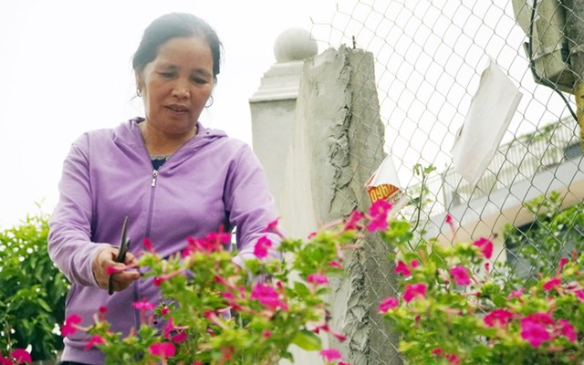Bà Bạch Thị Nga chăm sóc đường hoa tự quản. Ảnh: Trường Hùng.