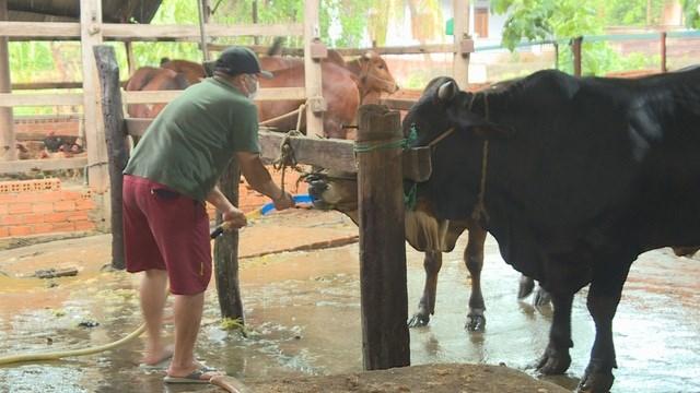 Chủ lò mổ cho bơm nước vào bò để tăng trọng lượng trước khi đem giết mổ.
