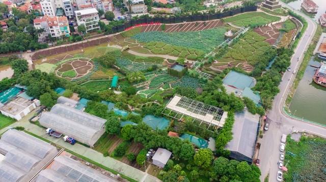 Hà Nội: Thung lũng hoa Hồ Tây 'mọc' trái phép trên đất dự án - Ảnh 1