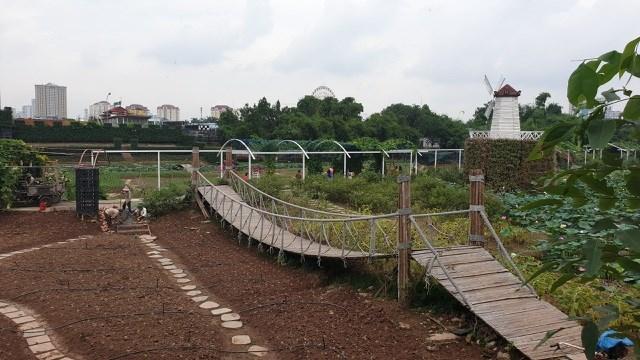 Toàn cảnh Thung lũng hoa Hồ Tây nhìn từ trên cao (Ảnh: Nguyễn Trường).
