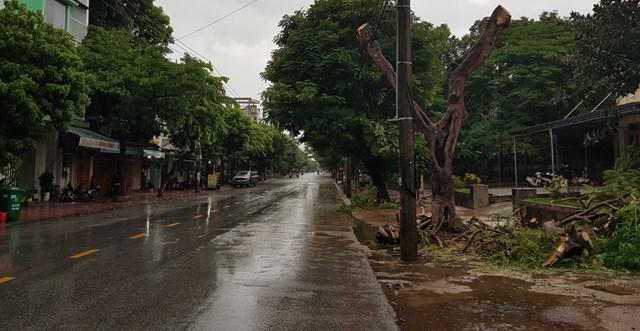 Đơn vị quản lý môi trường và cây xanh đã cắt tỉa cành khi có thông tin về bão.