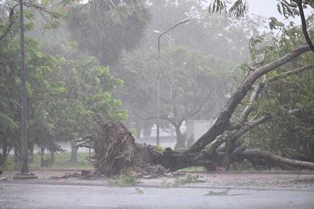 Cây cối ở TP Huế ngã rạp do ảnh hưởng mưa bão. Ảnh: Dân trí.