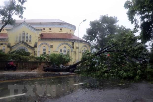 Cây xanh bị gió quật ngã trên đường Hà Nội, thành phố Huế. Ảnh:TTXVN.