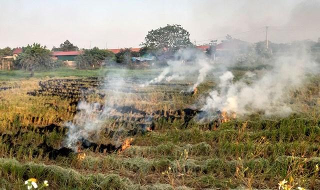 Đốt rơm rạ ảnh hưởng rất lớn đến môi trường, sức khỏe người dân.