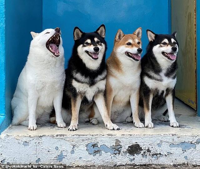 Bật cười với bộ ảnh về chú chó 'phá đám đỉnh cao' - Ảnh 3