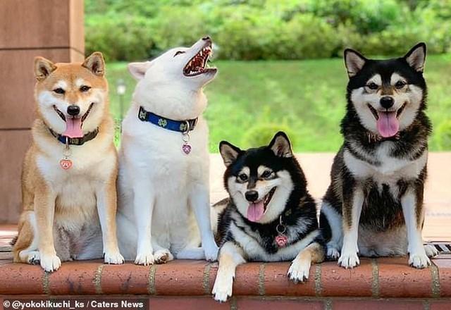 Bật cười với bộ ảnh về chú chó 'phá đám đỉnh cao' - Ảnh 6