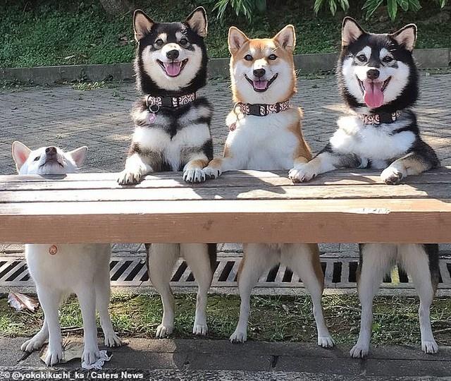 Bật cười với bộ ảnh về chú chó 'phá đám đỉnh cao' - Ảnh 4