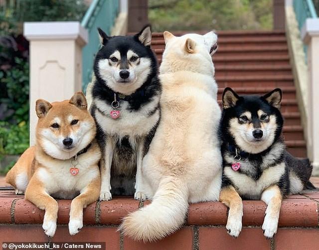 Bật cười với bộ ảnh về chú chó 'phá đám đỉnh cao' - Ảnh 8