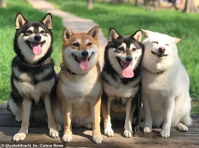 Bật cười với bộ ảnh về chú chó 'phá đám đỉnh cao' - Ảnh 1