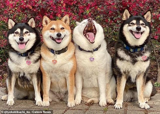 Bật cười với bộ ảnh về chú chó 'phá đám đỉnh cao' - Ảnh 2