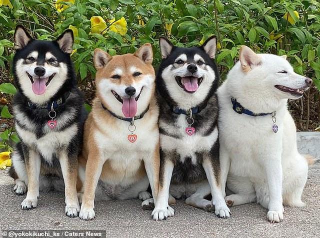 Bật cười với bộ ảnh về chú chó 'phá đám đỉnh cao' - Ảnh 7