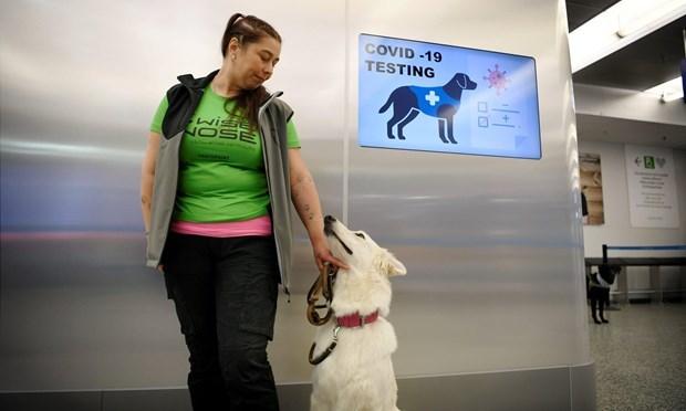 Thí điểm sử dụng chó phát hiện virus SARS-CoV-2 tại sân bay Helsinki - Ảnh 1