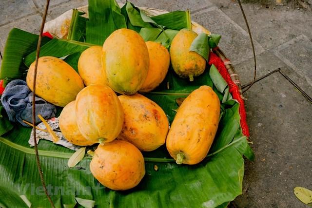 Đu đủ được trồng quanh năm, nhưng vào mùa thu thức quả này còn góp mặt trong mâm ngũ quả của từng nhà với mong ước đủ đầy, thịnh vượng. (Ảnh: Minh Hiếu/Vietnam+).