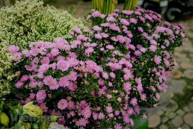 Những chùm hoa thạch thảo 'chinh phục' mọi ánh nhìn bởi sắc tím nồng nàn mà thi vị như một gia vị của tình yêu bình dị và êm đềm. (Ảnh: Minh Hiếu/Vietnam+).